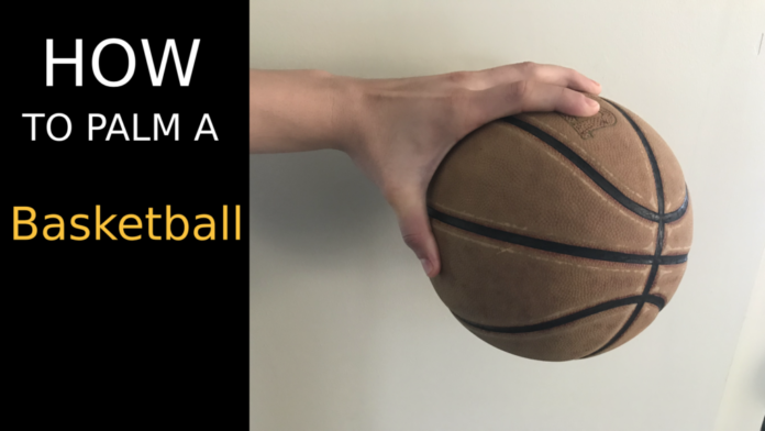 basketball_palm