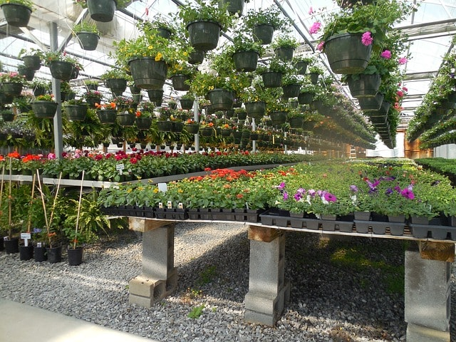 Outdoor Plant Care Business