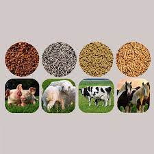 Animal Feed Probiotics Market
